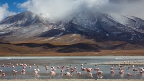 Flamingos and mountains