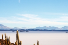 Cacti and Salar de Uyuni from Pescado Island (vertical)