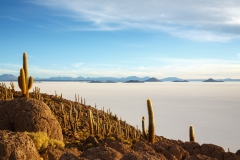 Cacti and Salar de Uyuni from Pescado Island