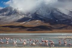 Flamingos and mountains