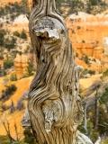 Bryce_Canyon_IMG_1082_G10