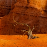 Bryce_Canyon__MG_0112_5D2s