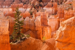Bryce_Canyon__MG_9901_5D2