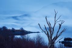 Loch assynt tree and mist