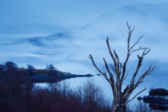 Loch assynt tree and mist