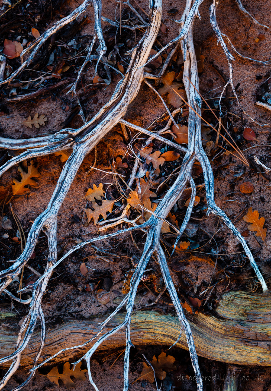 Zion forest detail