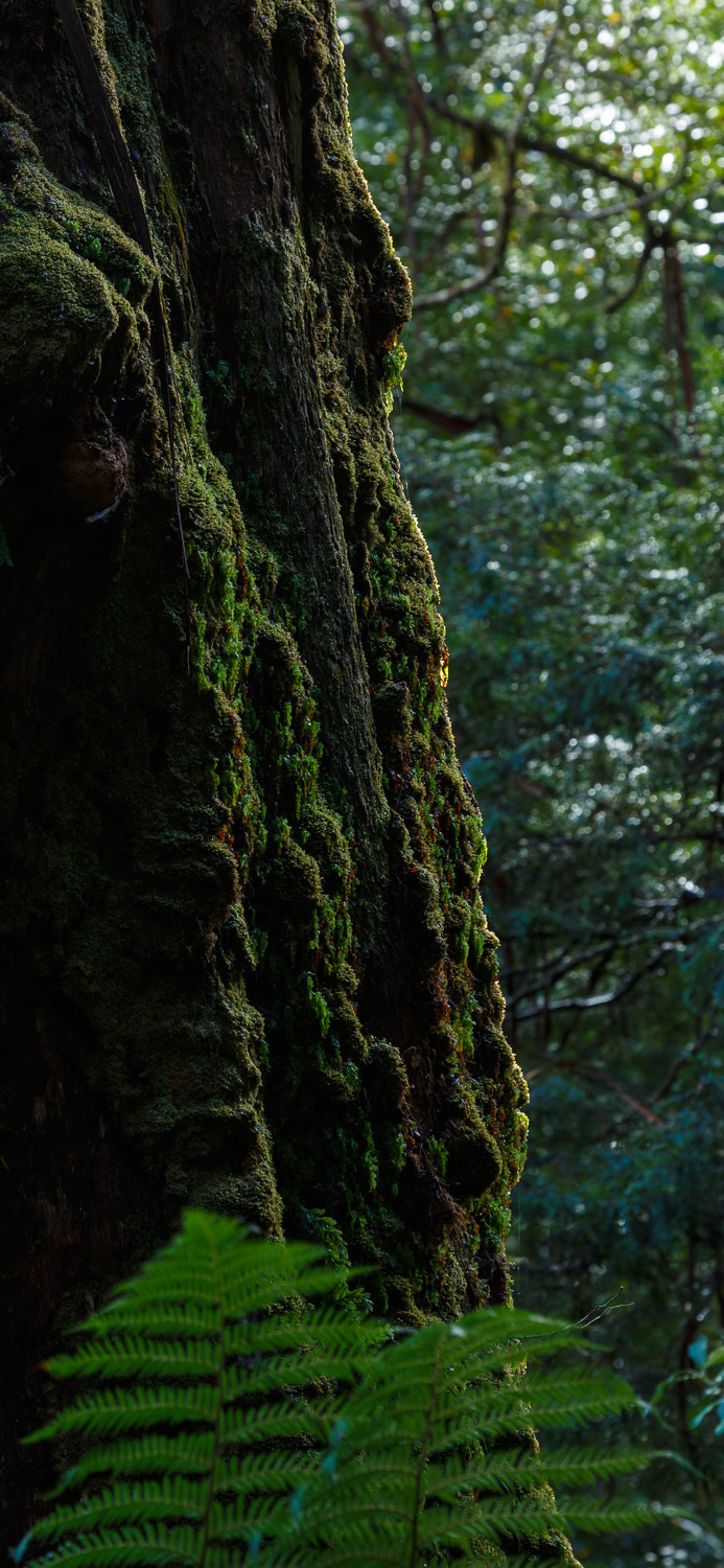 Tree detail, Styx River Nature Reserve