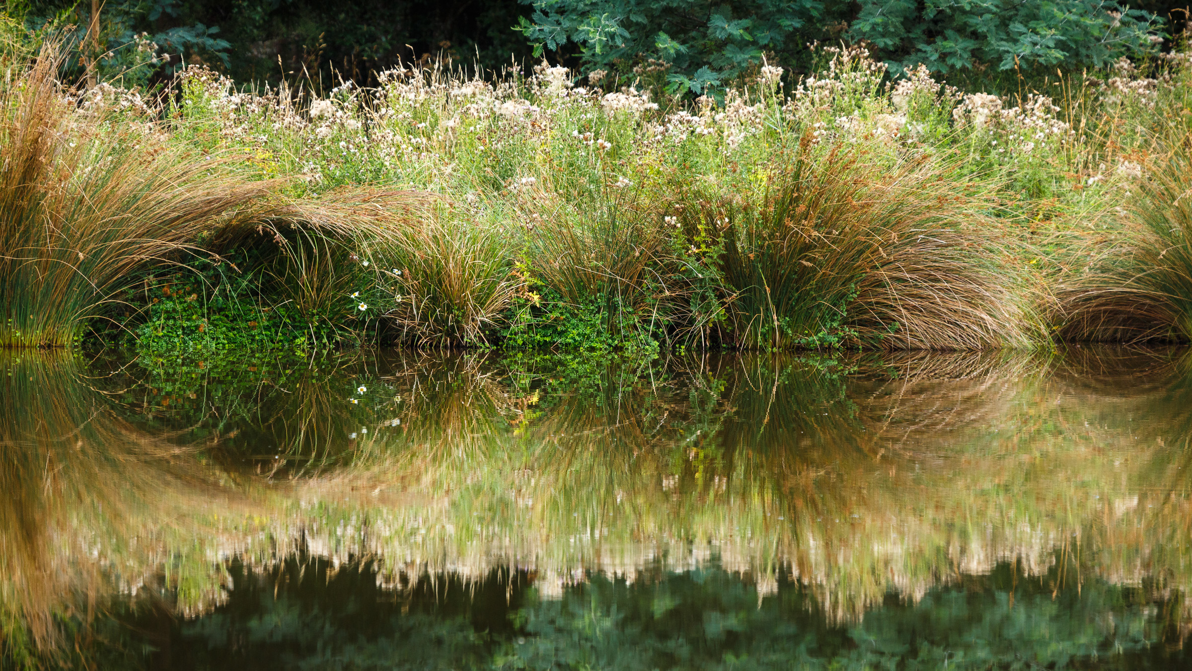 Maydena grass reflections