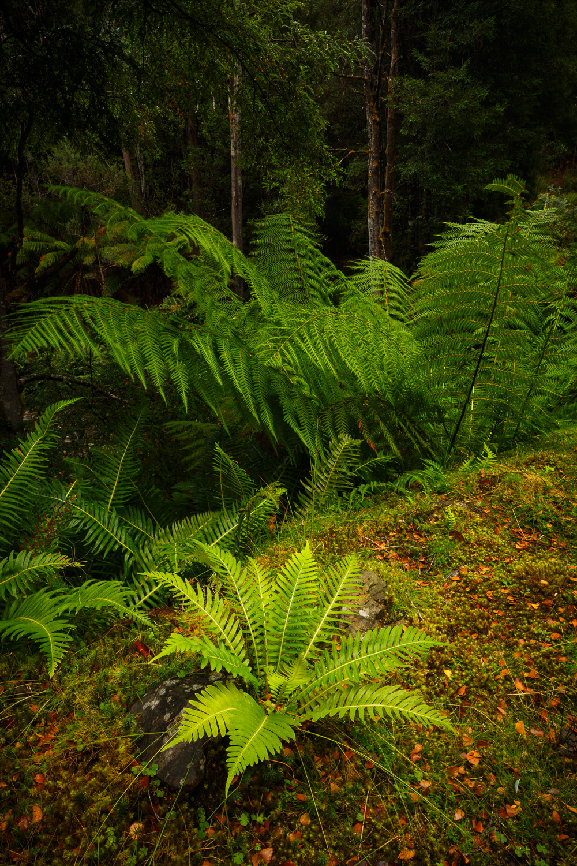 Ferns, Styx River Nature Reserve