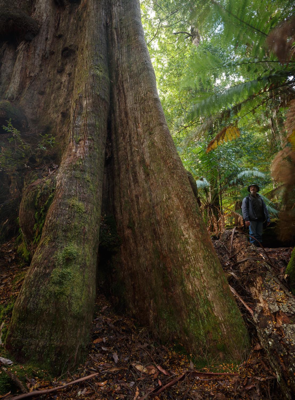 Big Tree Trail, Styx River Nature Reserve