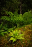 Ferns, Styx River Nature Reserve