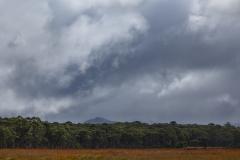 Trees and clouds along Scott's Peak Road