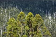 Trees from Warartah Road