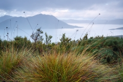 Button Grass and Lake Pedder from Scott's Peak